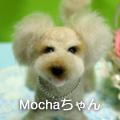 Mochaちゃん