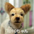TOTOちゃん
